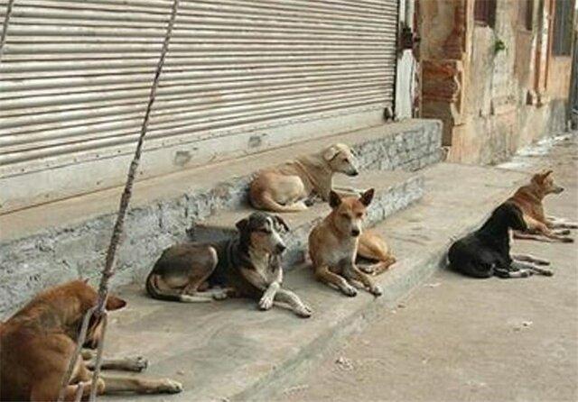 پناهگاه شماره 2 حیوانات کرج کی راه اندازی می گردد؟