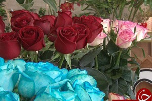 فراوری سالانه بیش از 4 میلیون شاخه گل رز هلندی در یزد