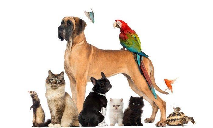 حیوانات خانگی، بایدها و نبایدها