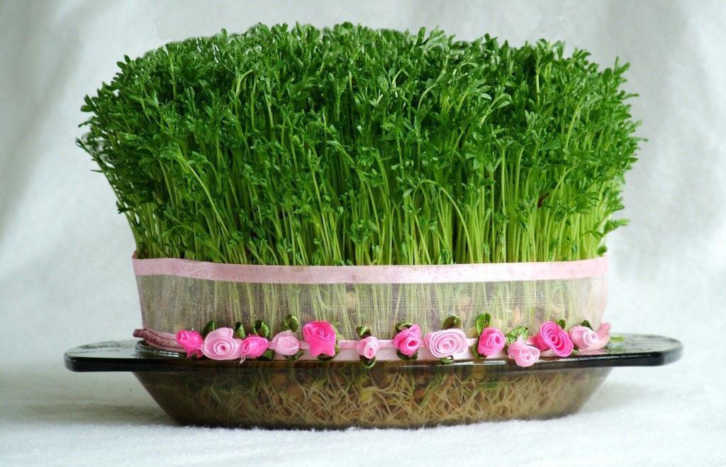 بهترین زمان کاشت و آموزش انواع سبزه عید با هسته نارنج، ارزن، عدس، گندم و &hellip