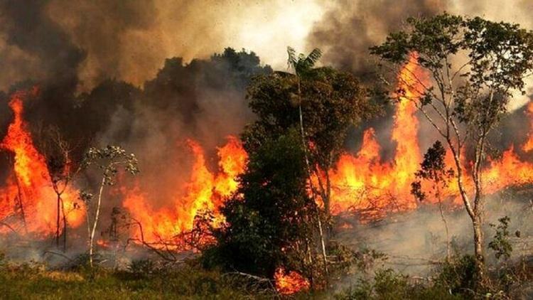 شورای شهر: آتش سوزی بوستان چیتگر تهران عمدی بود