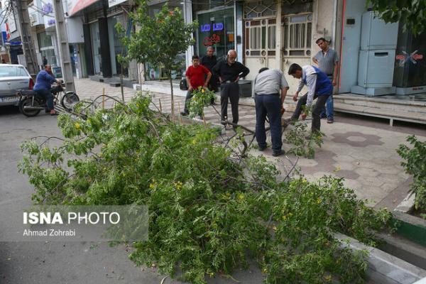 15 مأموریت آتش نشانی مشهد درپی وزش باد